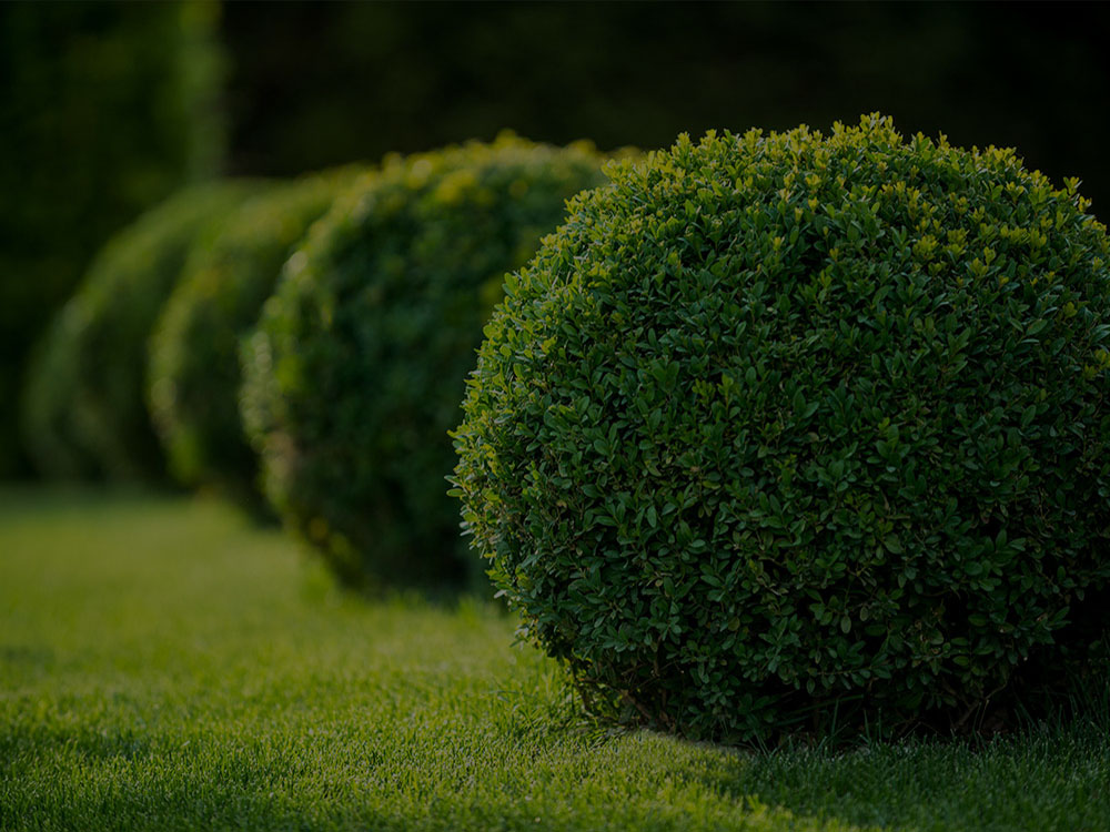 Hamptons Landscaping & Lawn Care